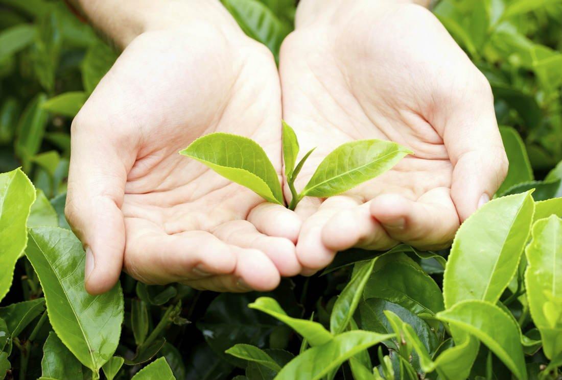 Les bienfaits du thé : pourquoi est-il si bon pour la santé ?
