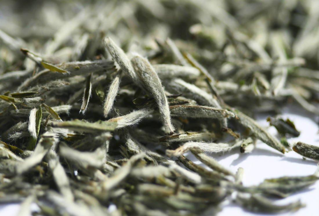 Le thé blanc : des Grands Crus légendaires