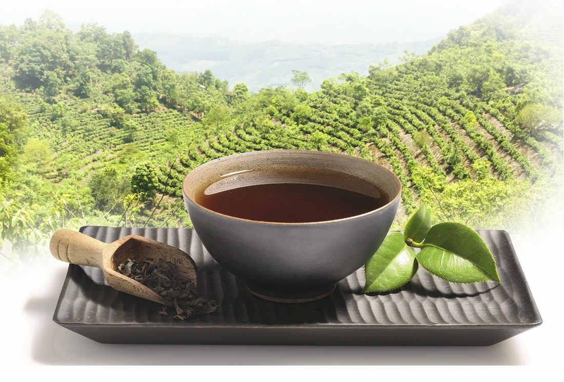 La consommation régulière de thé Hao Ling augmente les facteurs lipidiques cardioprotecteurs