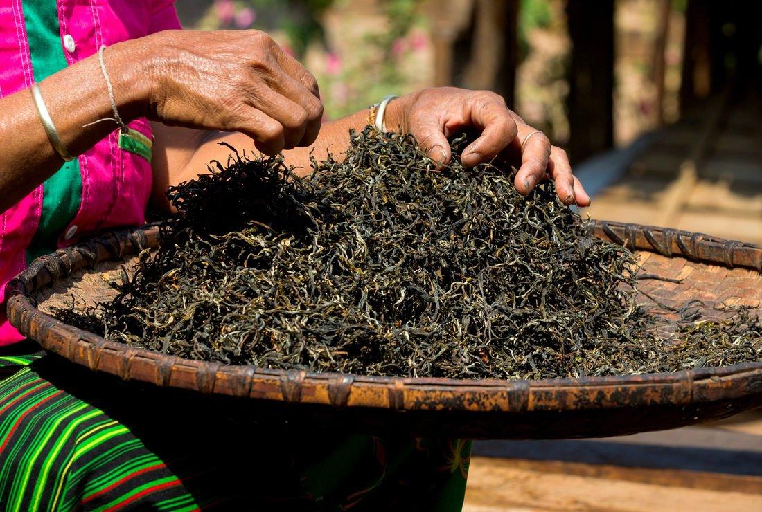 Effet d'un extrait de thé Hao Ling® (Camellia sinensis) sur l'activité antioxydante et hépatoprotectrice sur une culture primaire d'hépatocytes de rat