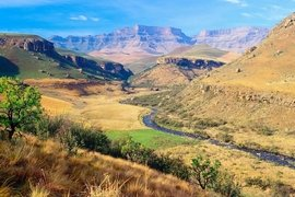 Le Rooibos : la boisson nationale de l'Afrique du Sud