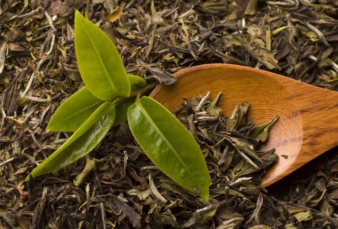 Effets lipotropes des moléculesantioxydantes du thé