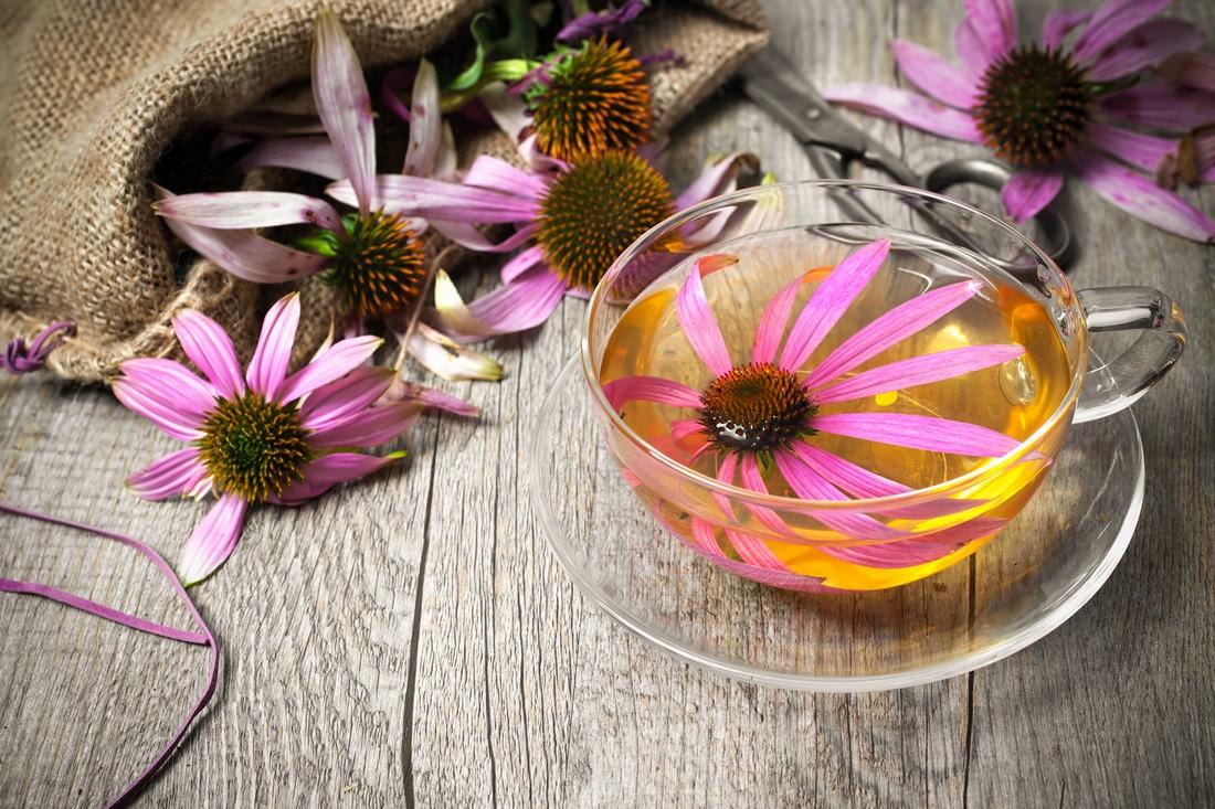 Les plantes pour booster ses défenses immunitaires naturellement
