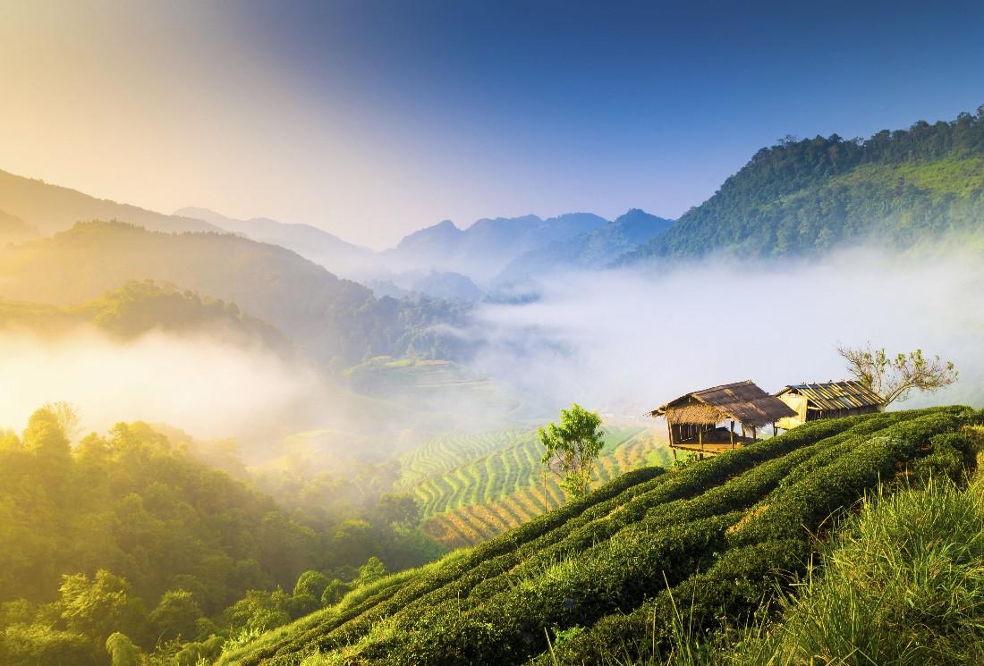Les meilleurs thés de Chine