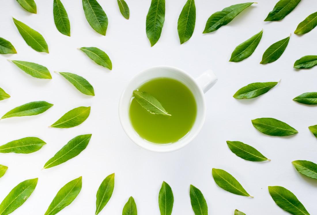Découvrez les vertus du thé vert bio