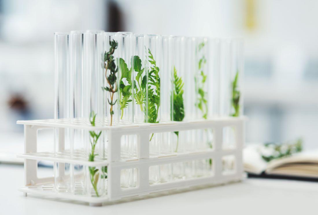 Quelles sont les meilleures plantes détox ?